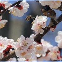 Пчелиное счастье :: Виктор Марченко