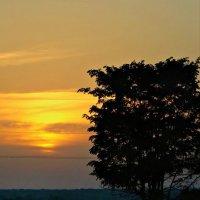 Одинокое дерево! :: Alla Kachuro
