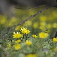весна :: Александр Черный