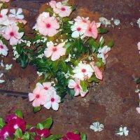 Цветы на песке :: Анатолий Малобродский