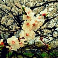 Весна :: Анна Бурсова