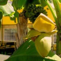 Южные плоды :: Гена Белоногов