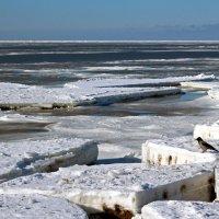 Белое море. Любопытная ворона :: Владимир Шибинский
