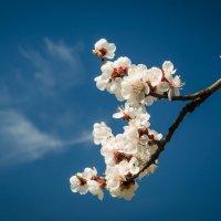 Вот она пришла Весна, как паранойя... :: Сергей Офицер