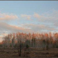 Закатный луч :: Виктор Бельцов