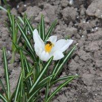 Весенние цветы :: Андрей Тер-Саркисов