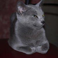 Кошка :: Леонид Петухов