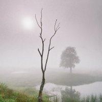 Утро туманное :: Валерий Талашов