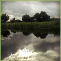 Россия Река Битюг :: Ольга Кривых