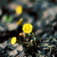 Весна :: Татьяна Киселева