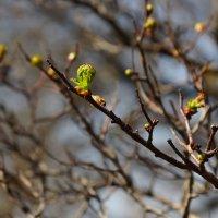Весна идет! :: Николай Тегин