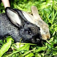 кролики :: Александр Пиняев