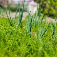 Сад - огород 2 :: _NIGREDO_ _