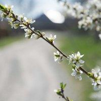 Весна-хорошо! :: Гульнара Москвитина