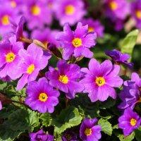 Весенние цветочки 2 :: Edita Rimkute