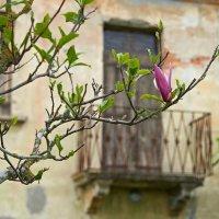 Опять весна... :: Valeriy(Валерий) Сергиенко