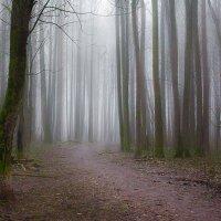 Таинственный лес :: Юлия Холодкова
