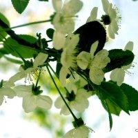 Весна :: Ридван Сардаров