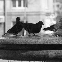 голуби у фонтана :: Арсений Корицкий