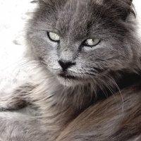 эти глаза... :: Юлия Богданова