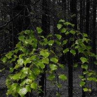 Темно-зеленый :: Сергей Шаврин