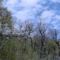 весенний лес :: Мария Климова