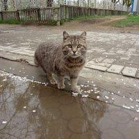 der verlorene Katze :: Денис/Алина Крылов(а)