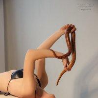 Snake :: Сергей Трушев