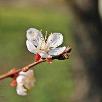 вот она пришла, весна, как паранойя :: Polina Kostryukova