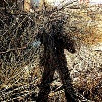 как мне жаль это дерево :: Фотогруппа Весна.