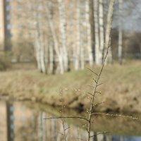 Весна идёт, весне дорогу ! :: Gordon Shumway