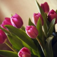 Тюльпаны для подруги. :: Лазарева Оксана