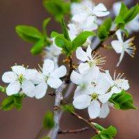 цветы :: Диана Матисоне