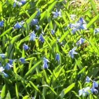 Травинки, цветики,... ВЕСНААААААААааааааааа!........... :: Владимир Павлов