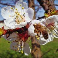 Весна пришла #2 :: Евгений Кочуров