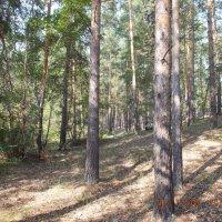 В лесу :: Александр