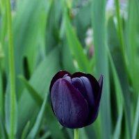 Цветочная весна.2. :: Alina Bondar