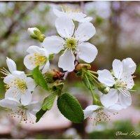 Весна пришла #4 :: Евгений Кочуров