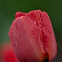 Главный цветок весны :: Александр Крупский