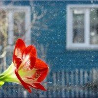 Весна на дворе! :: Владимир Шошин