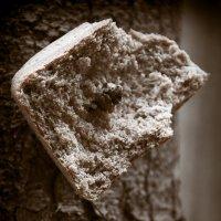 хлеб :: Светлана Фомина