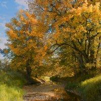 золотая осень :: Александра Лазукова