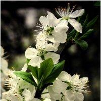 Весна :: Евгений Кочуров