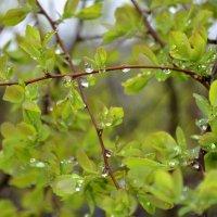 Весна.Ощущение дождя... :: Наталья Костенко