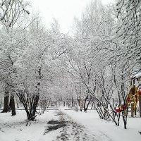 Зима вернулась! :: Наталья Бартоломей