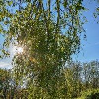 Апрельское солнце :: Николай Глазьев