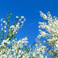 Высотная весна :: Ирина Сивовол