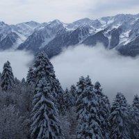 коварный туман :: Маргарита Сазонкина