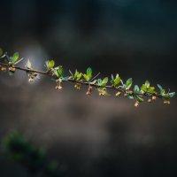 ..в темно-синем лесу... :: Владимир Хижко