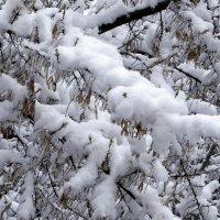 А у нас снег! 24апреля! :: Елизавета Успенская